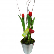 Tulipa Amor Eterno