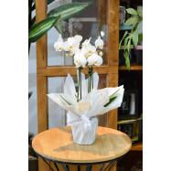 Orquídea na Seda