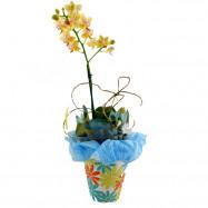 Mini Orquídea na Cestinha