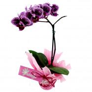 Mini Orquídea no Cachepô de EVA
