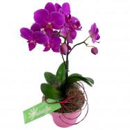 Mini Orquídea na Lata