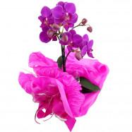Mini Orquídea na Seda