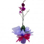 Orquídea 1 Áste na Lata