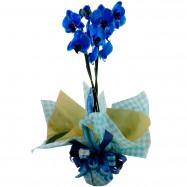 Orquídea 2 Áste Azul na Seda