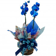 Orquídea 2 Áste Azul no Rústico