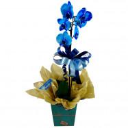 Orquídea Azul Cachepô de Papel