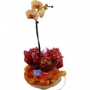 Orquídea 1 Áste no Chapéu
