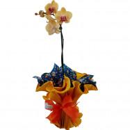 Orquídea 1 Áste no Italiano
