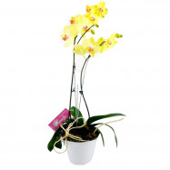 Orquídea na Lata