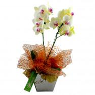 Orquídea no Cachepô de Espelho