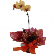 Orquídea 1 Áste na Seda