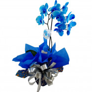 Orquídea Azul na Seda