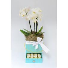 Caixa Mãe Te Amo! - Mini Orquídea