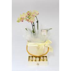 Caixa Doce Mãe - Mini Orquídea